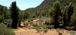 Vallei van Cabriel