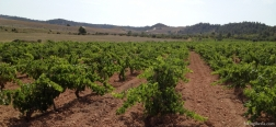 Wijnvelden op de route