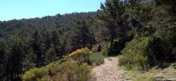 Pad richting de Arroyo de las Guarramillas