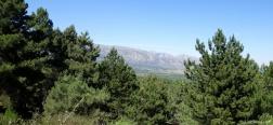 View from El Pinar