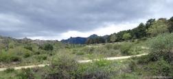 Trail through Los Eriales