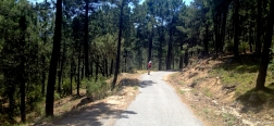 Trail through La Jarosa