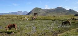 Horses near the hut of Lurbe