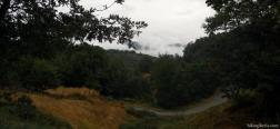 Bos nabij A Pobra de Trives