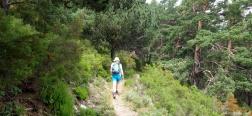 Trail through Haya Seca