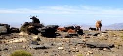 Cows near Las Chorreras