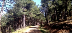 Pad naar Pico Regajo