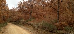 Herfst in Hoyo Navar