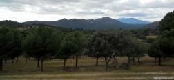 The Pinarejo