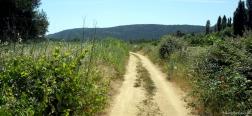 Die Weingegend-Route