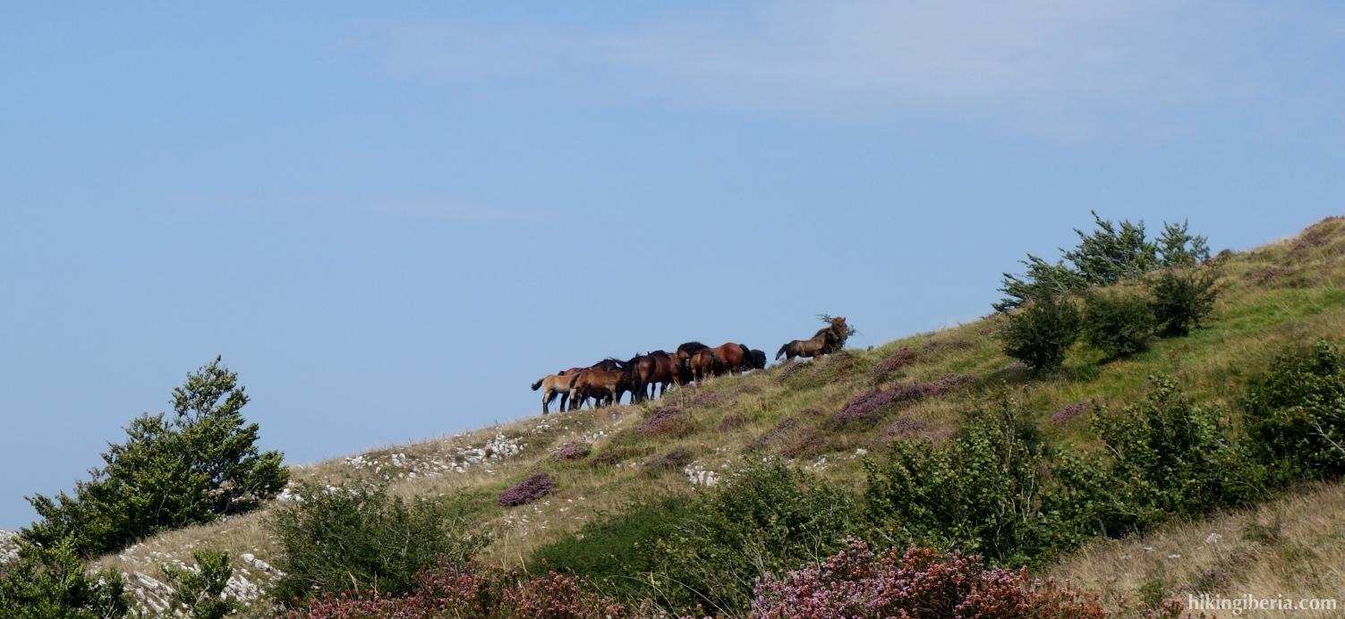Pferde während des Aufstiegs nach Beriain