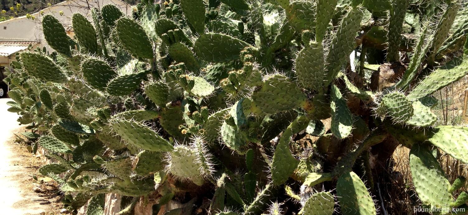 Cactus op de route