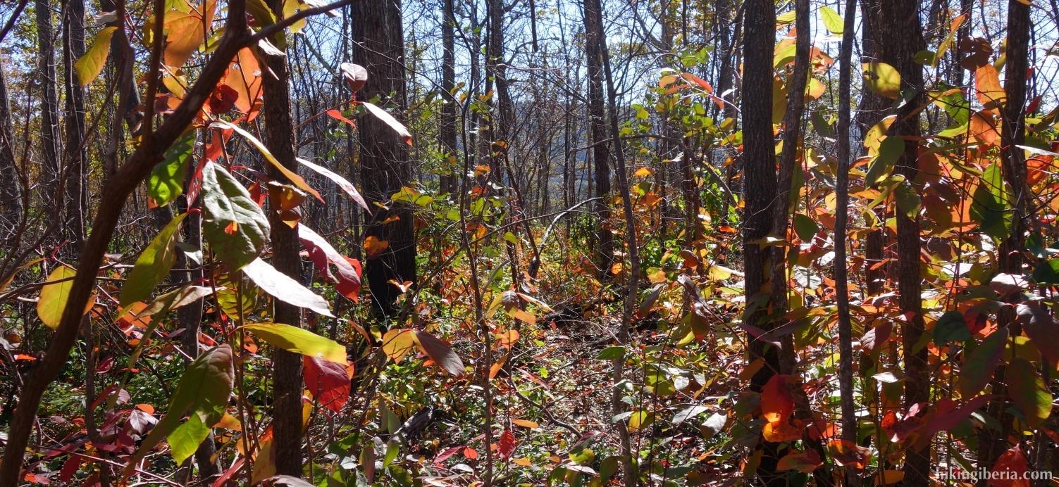 Herbst im Shenandoah Nationalpark