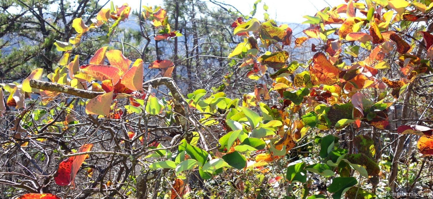 Otoño en el Parque Nacional Shenandoah