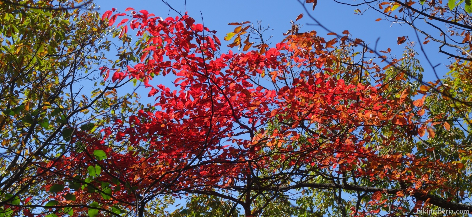 Herfst in het Shenandoah National Park