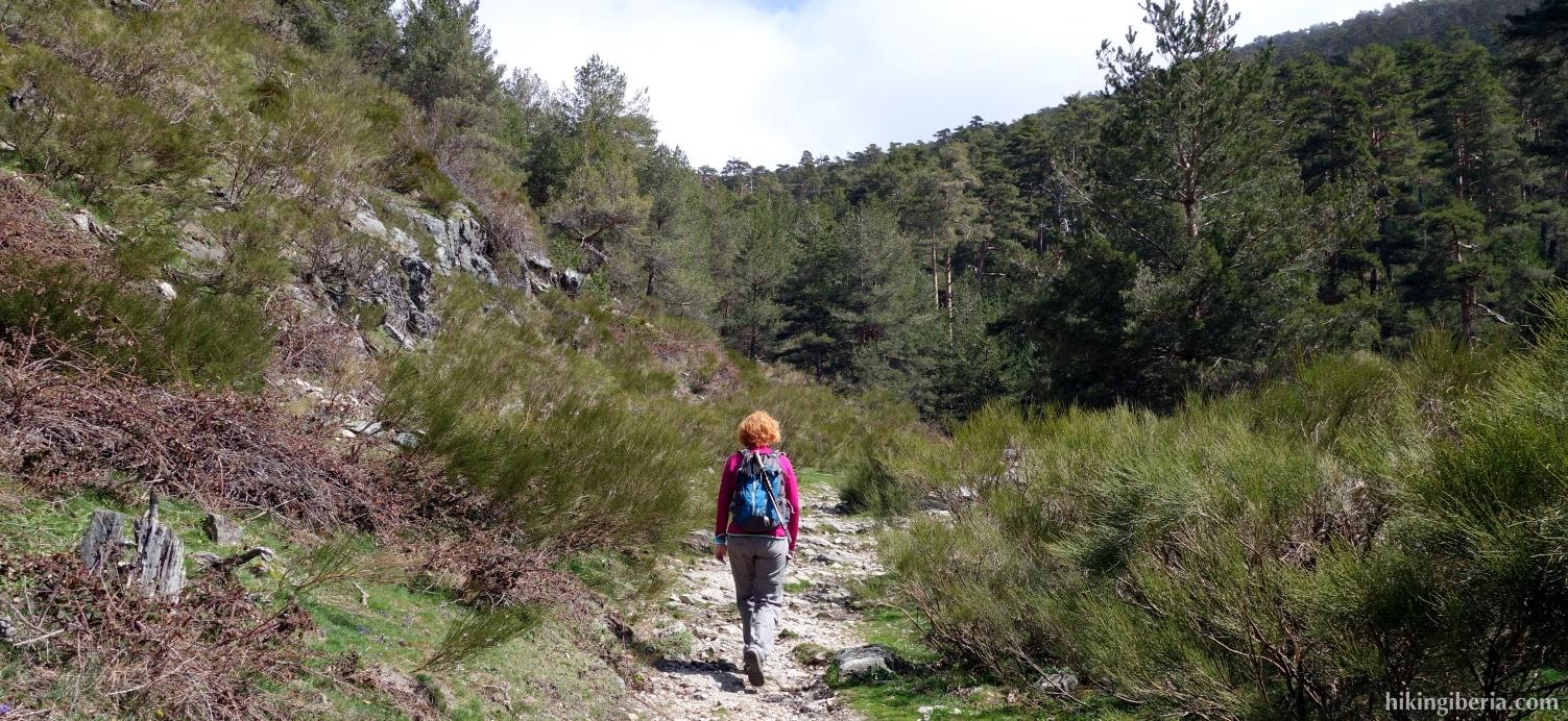 Pad naar de Puerto de la Fuenfría