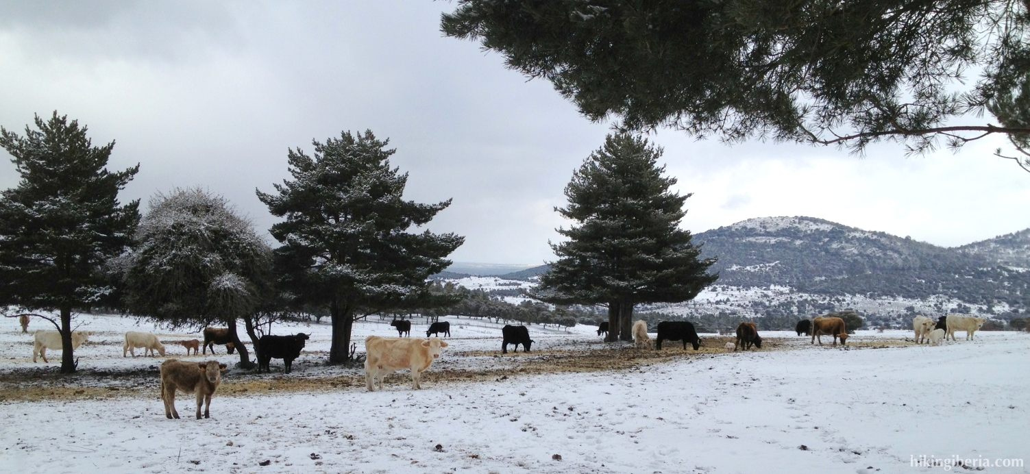 Cañada Real Sorana Occidental