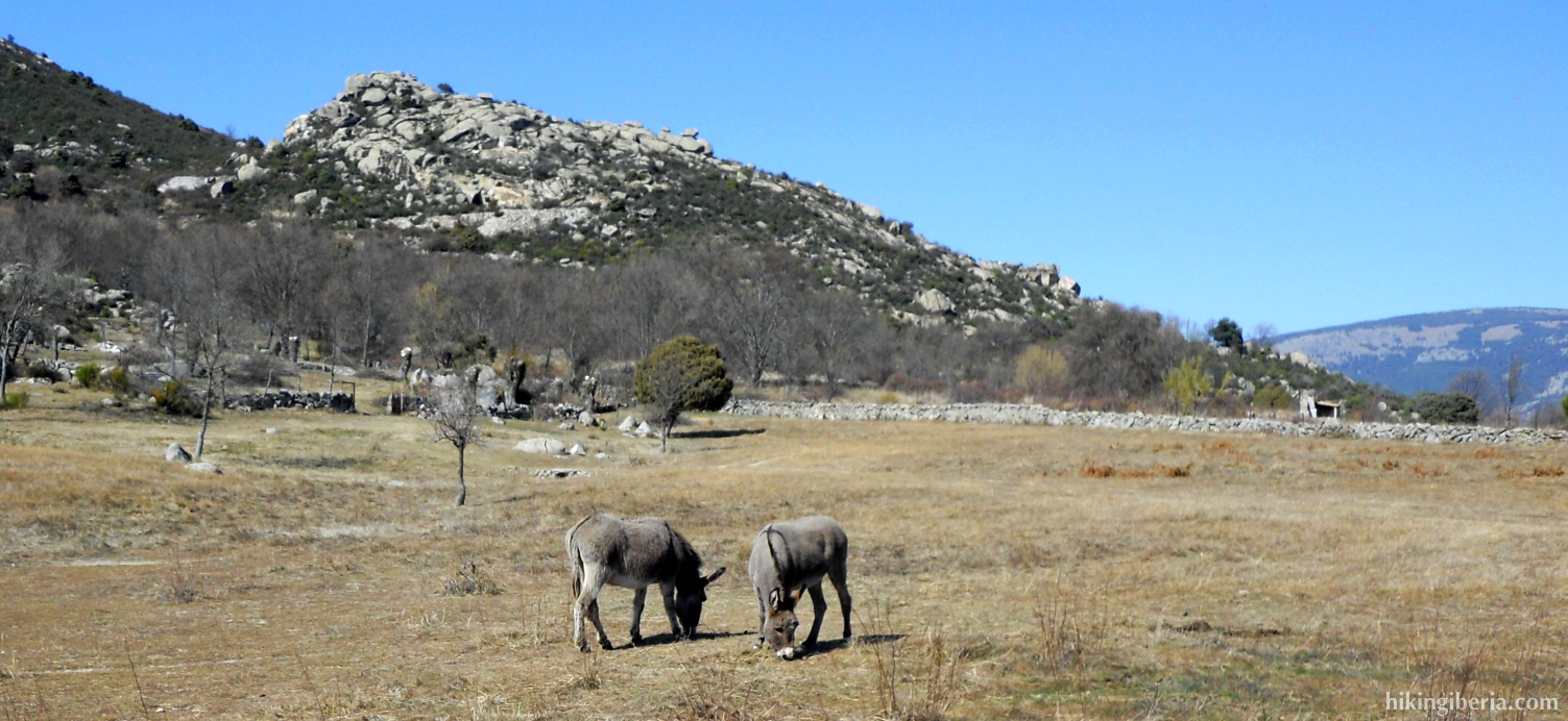 Donkeys on the way