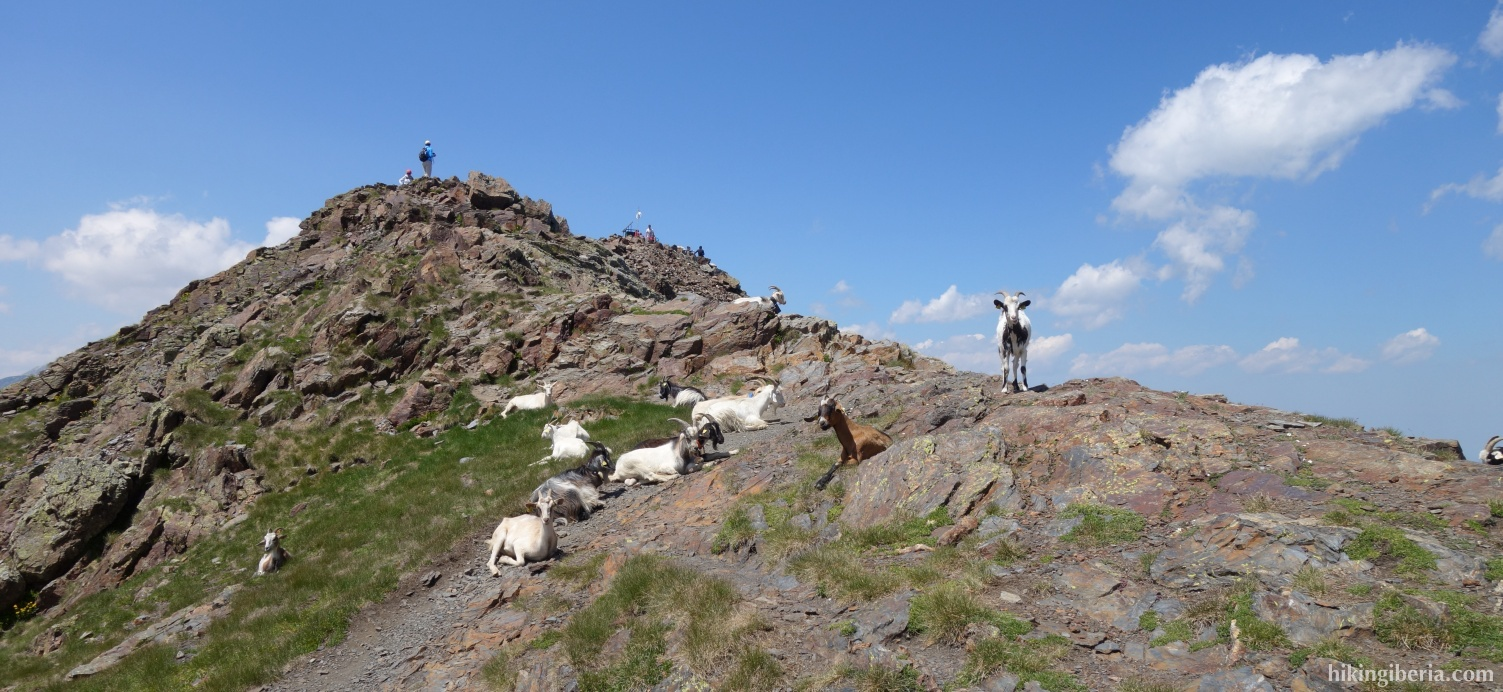 Goats on the Pico Salbaguardia