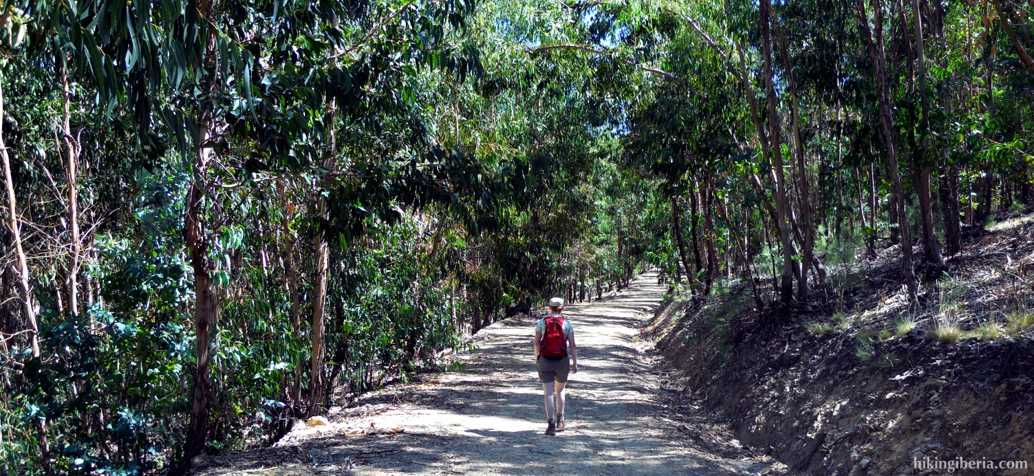 Bos op de Transfrontera