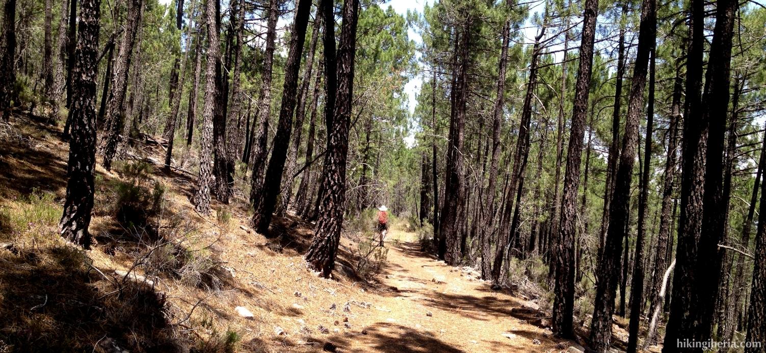 Ascent to the Alto del Telégrafo