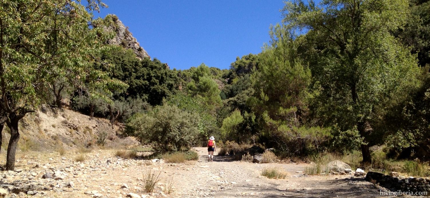 Road from El Nacimiento