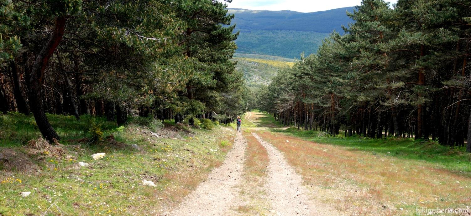 Dennenbos vlakbij La Dehesa