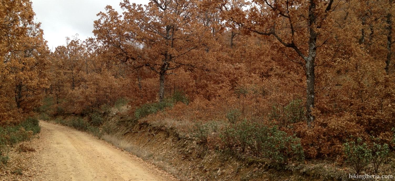 Autumn in Hoyo Navar