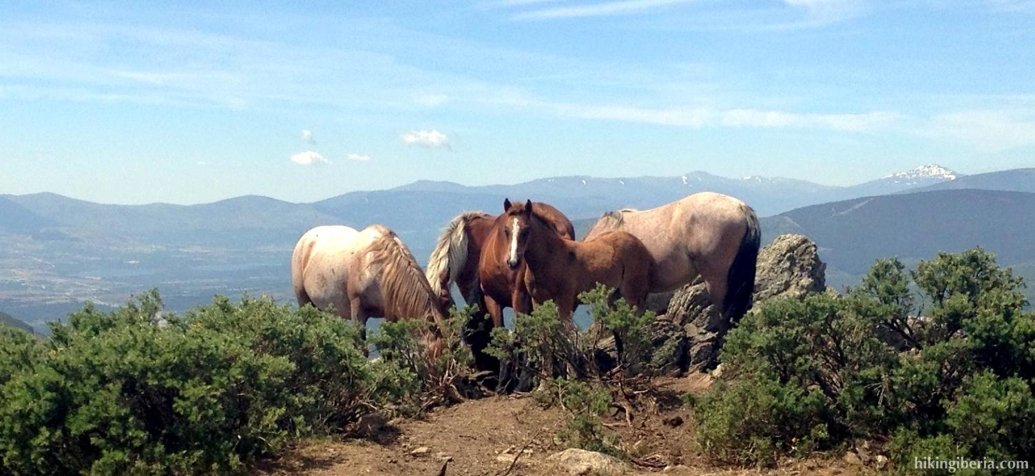 Caballos en la Sierra Cebollera