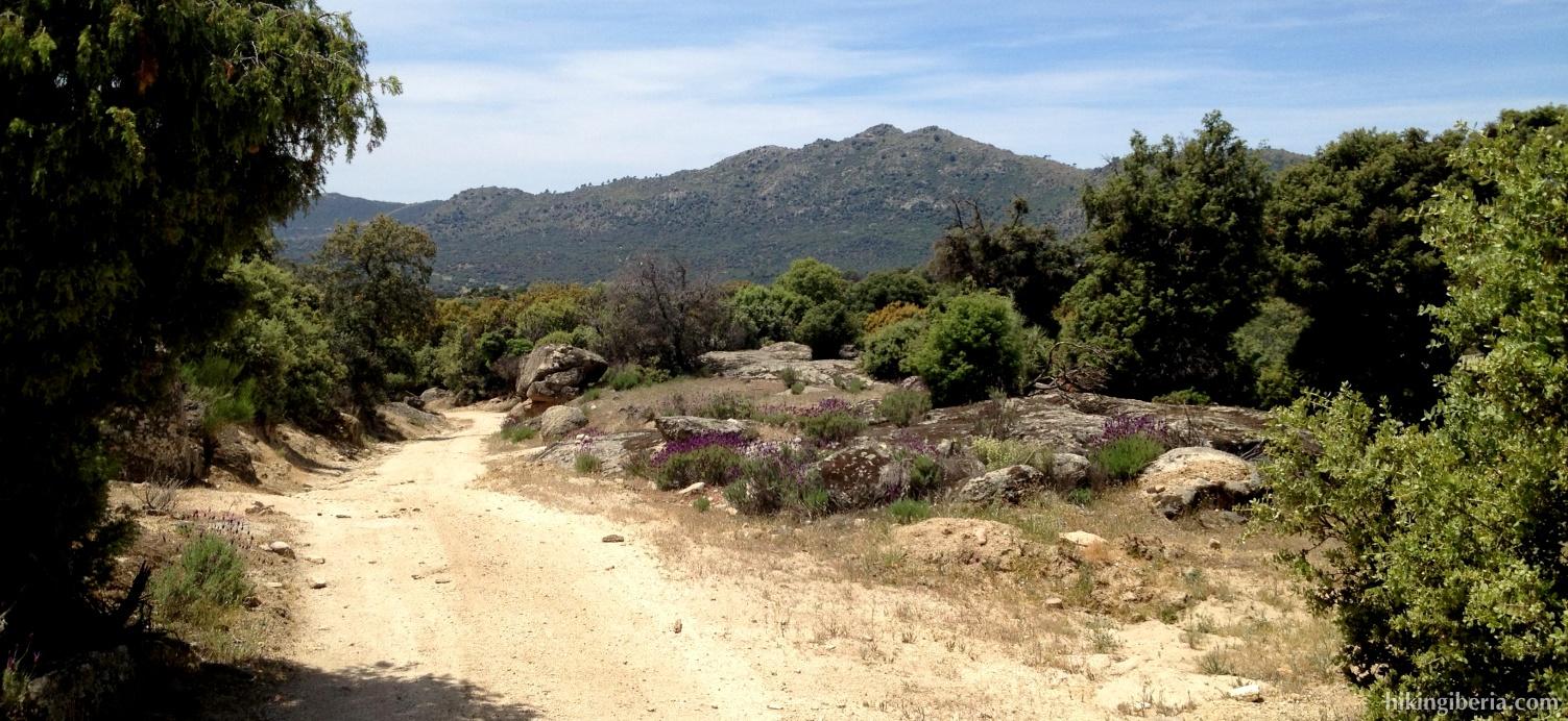 Trail near the Alto del Pinar