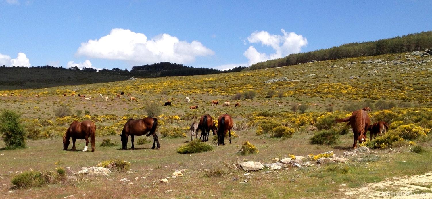 Caballos cerca del Pinarejo