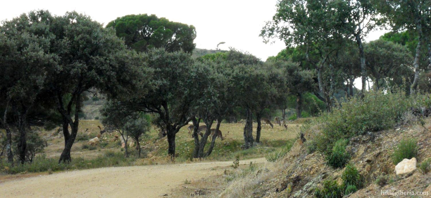 Deer on the Alto Parada
