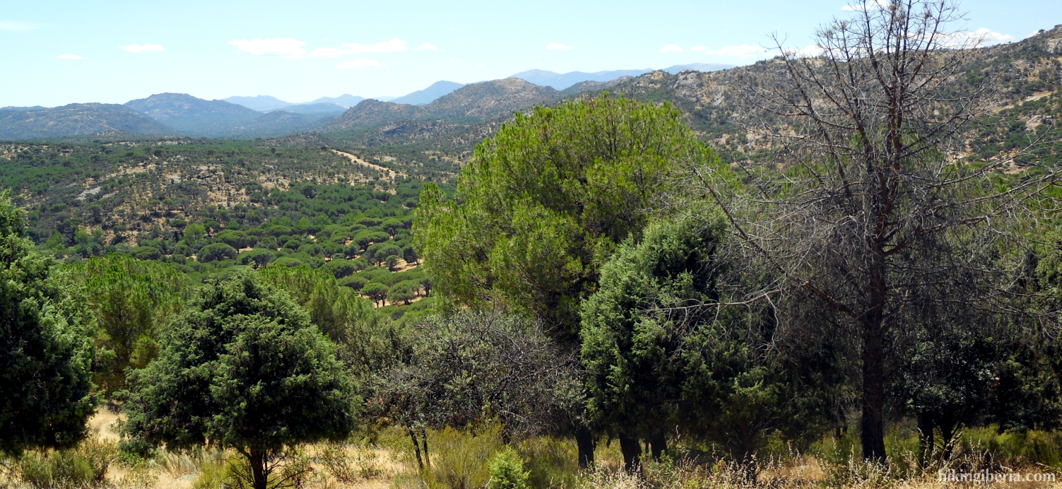 Bos rond Valdemaqueda