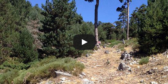 Video Montón de Trigo