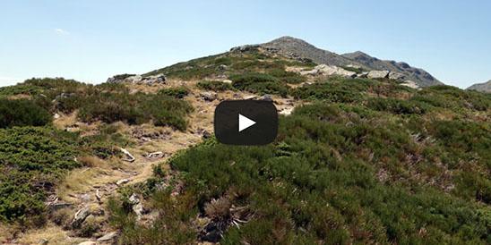 Video La Pinareja von Mujer Muerta