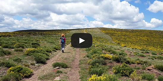 Video Pico Colgadizos